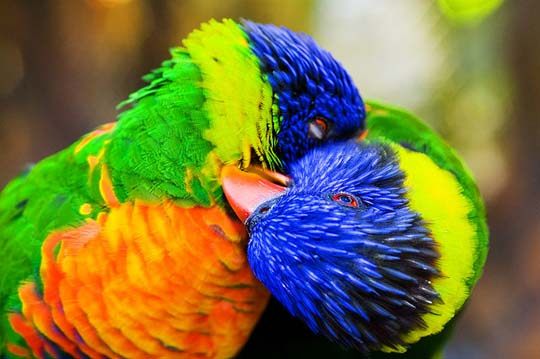 The Power Of Color 40 Superbly Colorful Bird Photos Designbeep