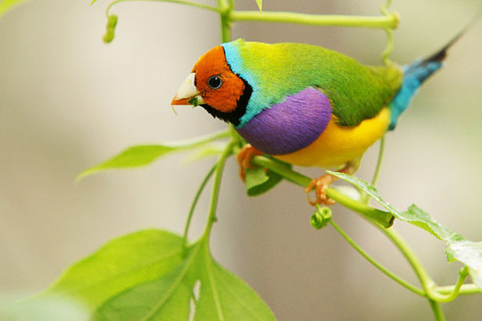 most colorful bird in the world