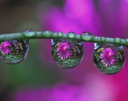 1.dewdrop reflection photos