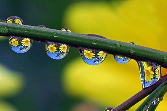 water droplet photography reflected - photo #17