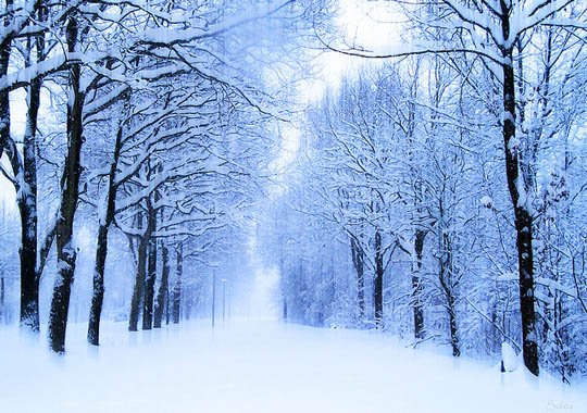 Snowy Trees The magic of nature:35 dazzling snowy tree photos ...