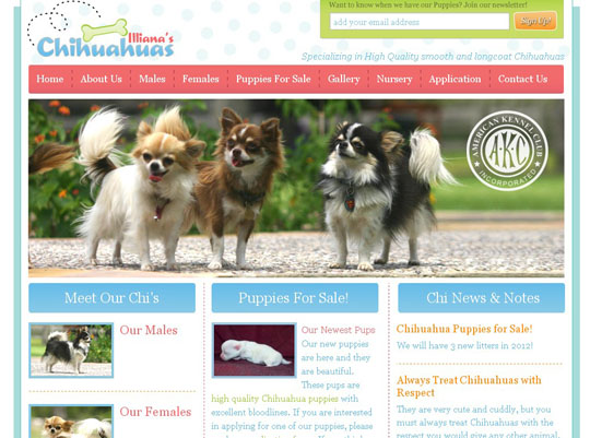 pet websites