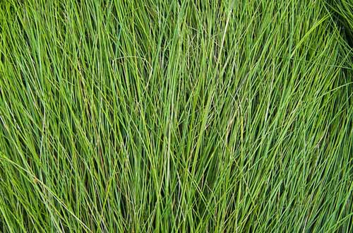 50 Free High Resolution Grass Textures for Designers