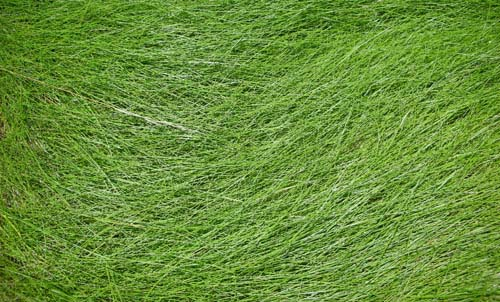 50 Free High Resolution Grass Textures for Designers Designbeep