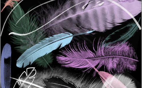 photoshop feather brushes
