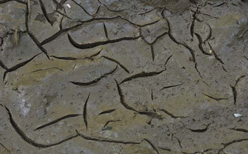 cracked mud textures