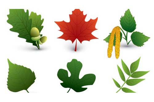 leaf and tree vectors