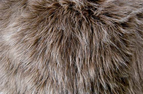 A Collection Of High Quality Free Fur Textures Designbeep
