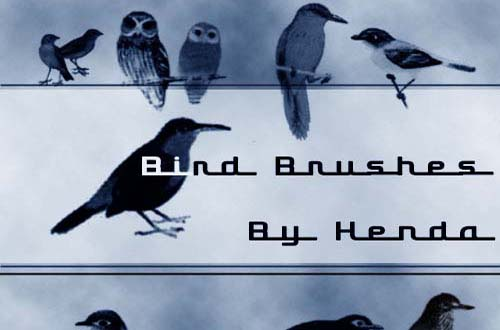 photoshop birds brushes