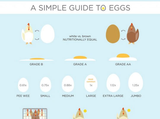 3 A Simple Guide To Eggs