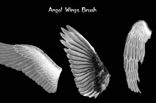 photoshop wing brushes