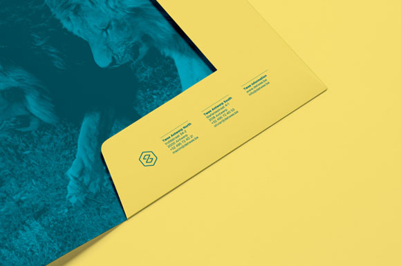 15.Visual Identity and Branding Series  Twee Branding