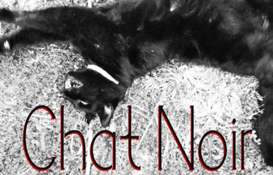 1.Free Font Of The Day   Chat Noir